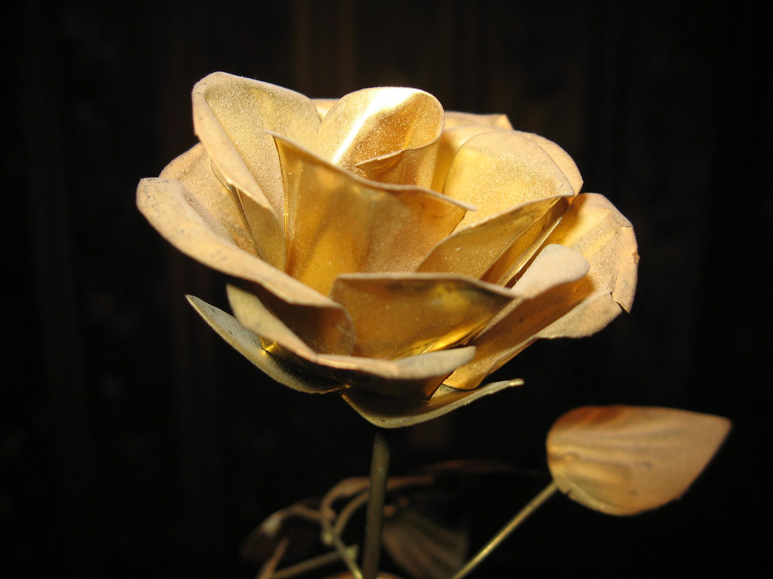 Golden Rose HD Image Of The Or Gold Flower