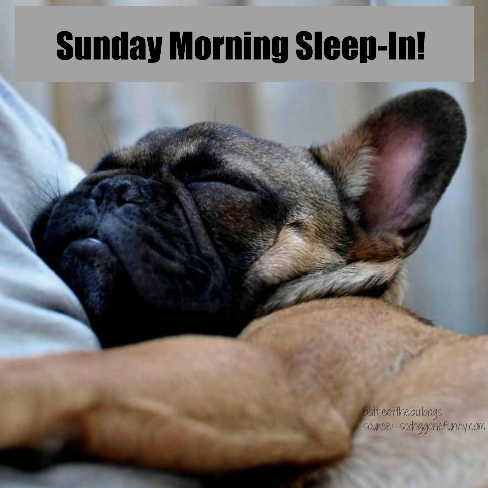 Sunday Morning Sleep In French Bulldog French Bulldog Puppy