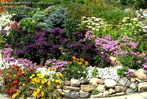 Annual and perennial flower garden lined with a rock for Perennial flower bed design