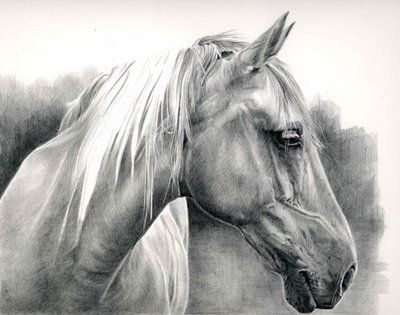 Horse Drawings In Pencil