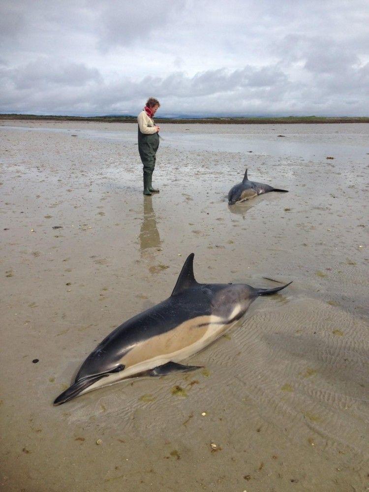 Πως να σώσουμε ένα εκβρασμένο δελφίνι.