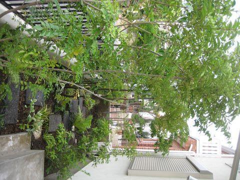 雑木の庭2