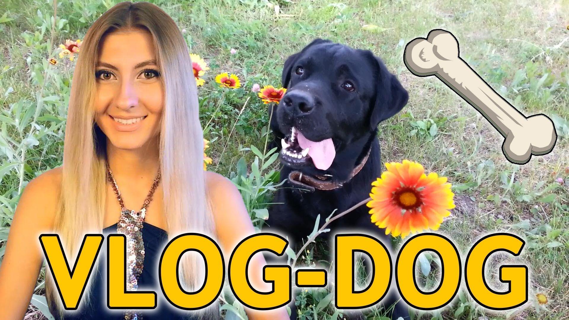Едем за собакой | ПОПЫТКА №2 - Лабрадор ❤ VLOG #5