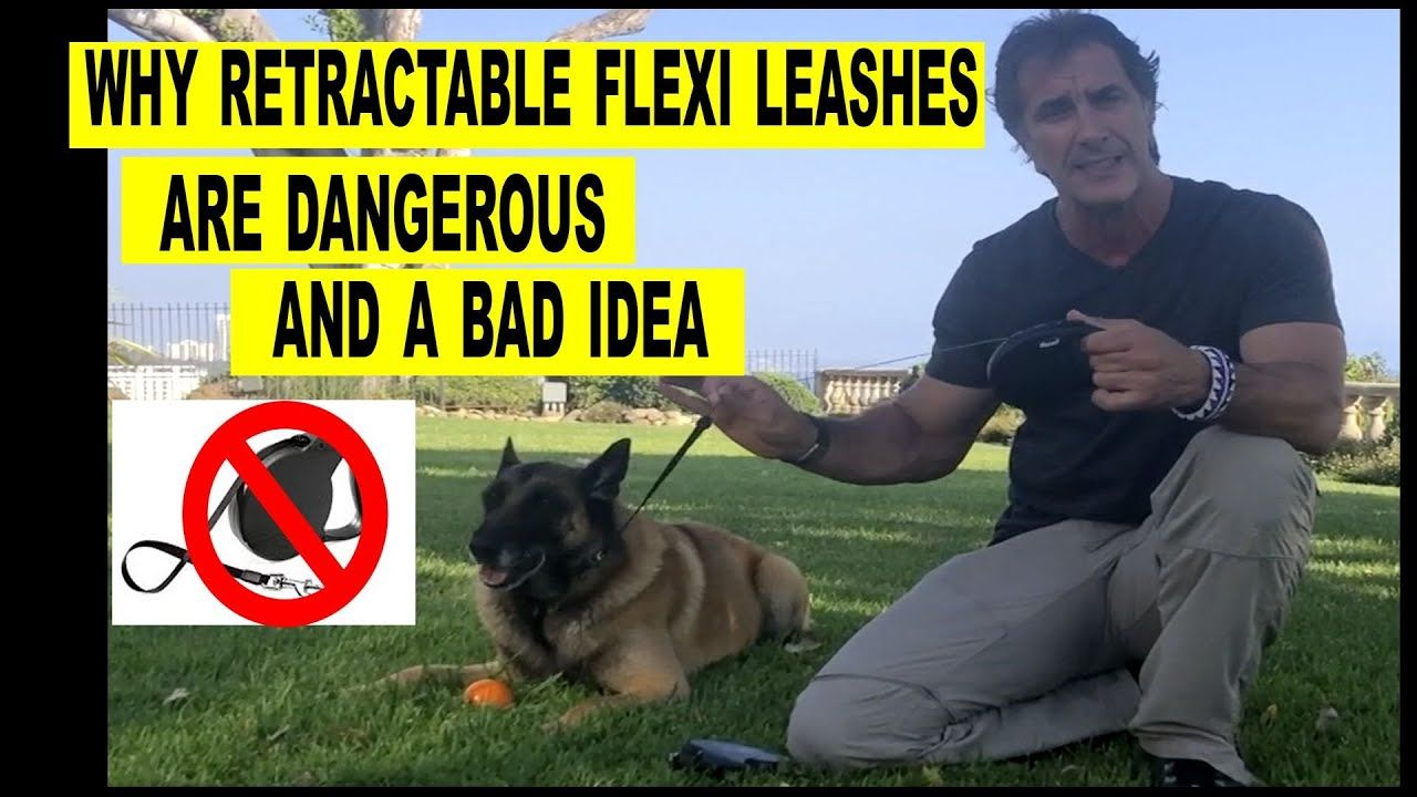 Why Retractable Flexi Leashes Are Bad Robert Cabral Dog