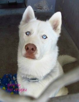 Even Beautiful Dogs Wind Up At High Kill Shelters Stark Id
