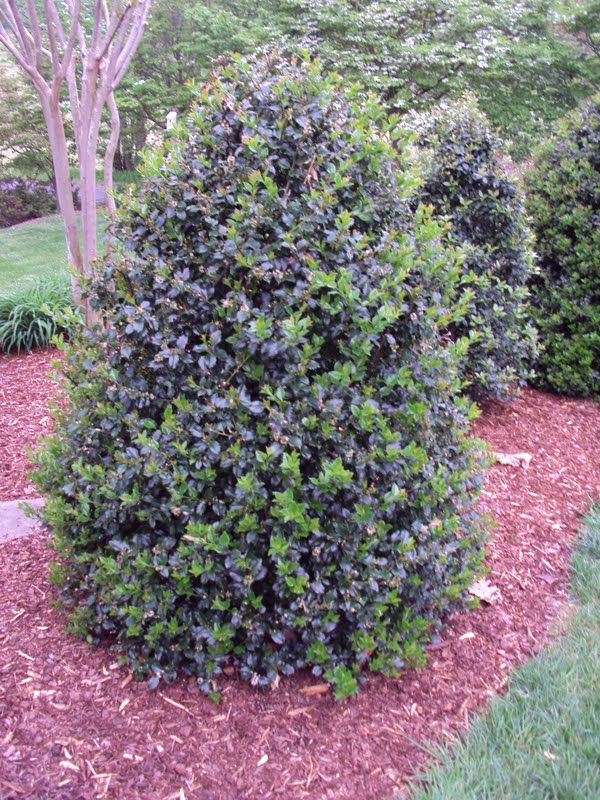 Blue Prince Holly Buy Online, Best Prices |Prince And Princess Blue Holly