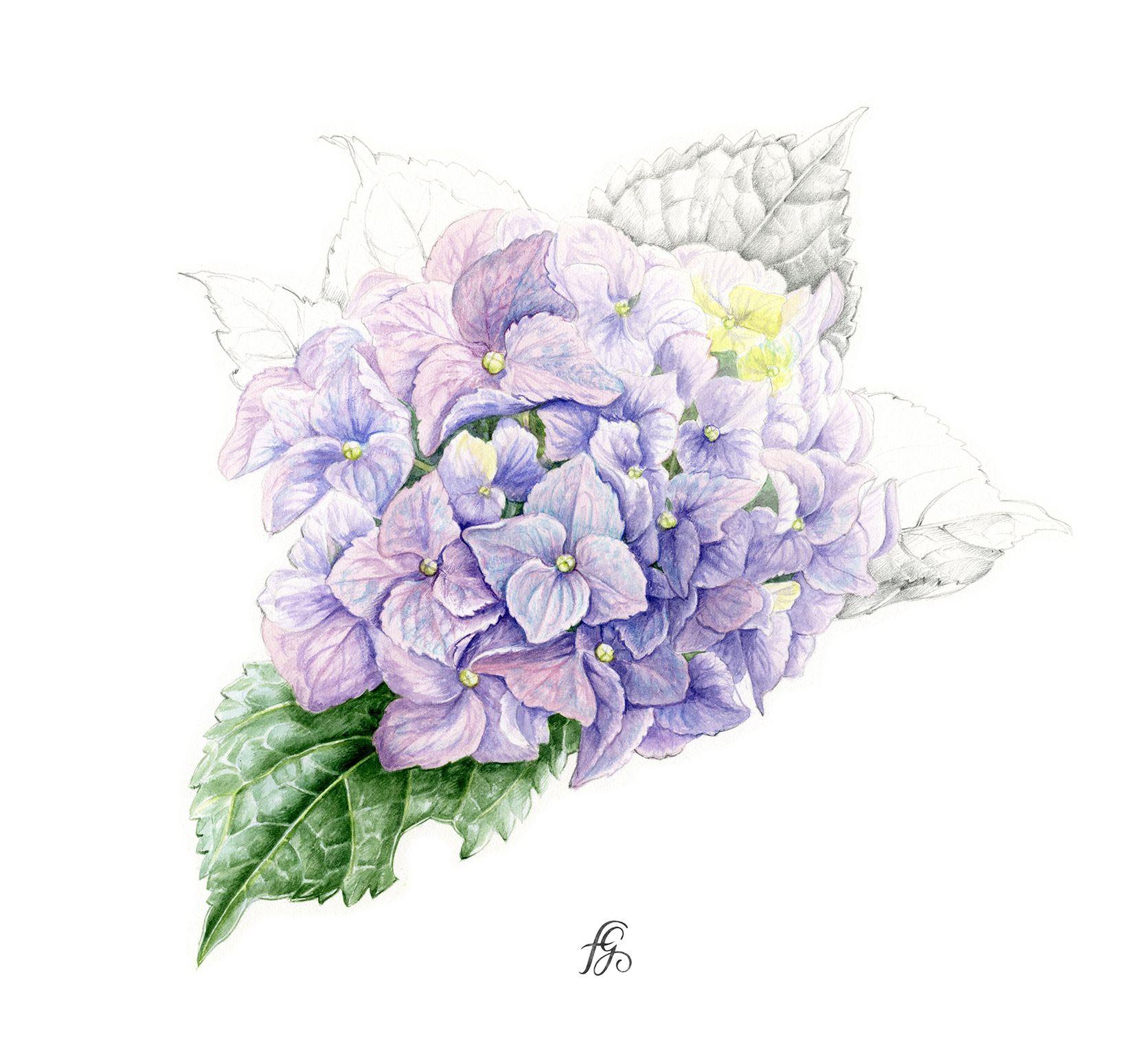 Paris France En 2020 Illustration Botanique Aquarelle Fleurs