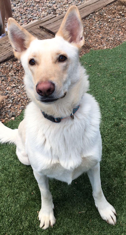 Adopt Pepsi And Cola On Pet Adoption Dog Lovers Pets