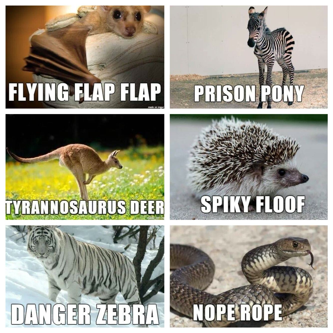 Renaming animals Funny animal jokes, Funny animal names