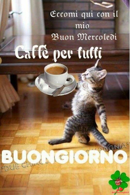 Buongiorno divertente per whatsapp 387593 buongiorno cats for Buongiorno divertente sms