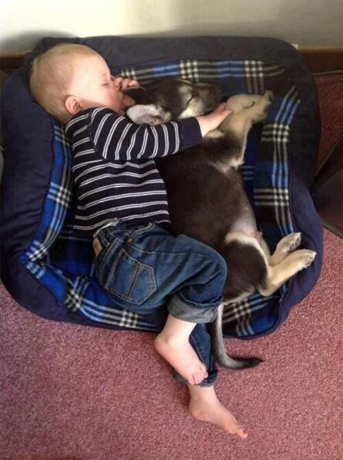 via DailyDose Of Puppies @TheDaiIyPuppy  ·   Best friends forever