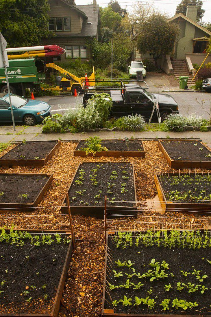 Sus Vecinos Vieron Éstas Cajas En Su Jardín. 60 Días Después ...