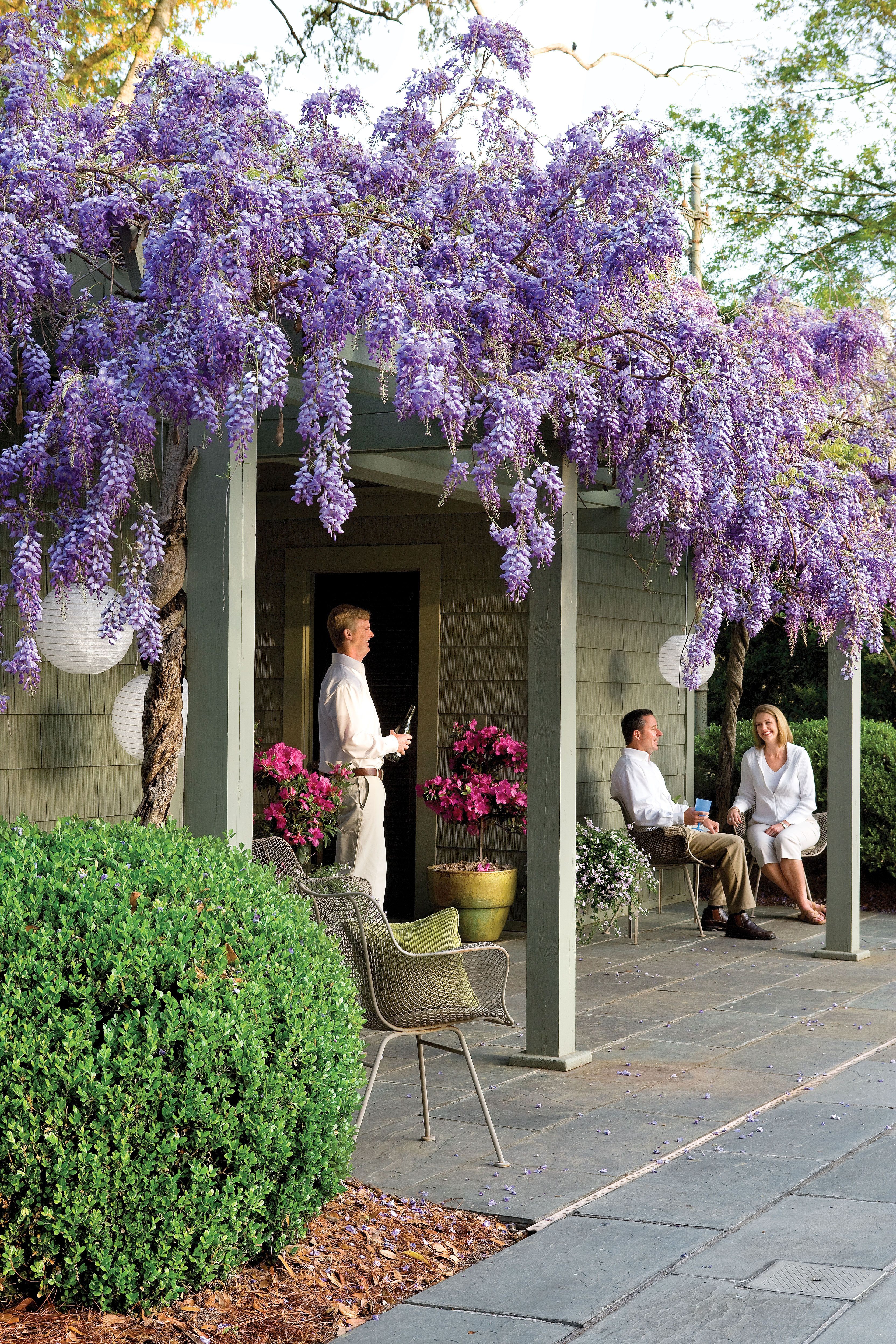 Rampicanti Che Crescono All Ombra what you need to know (and love) about wisteria | idee giardino
