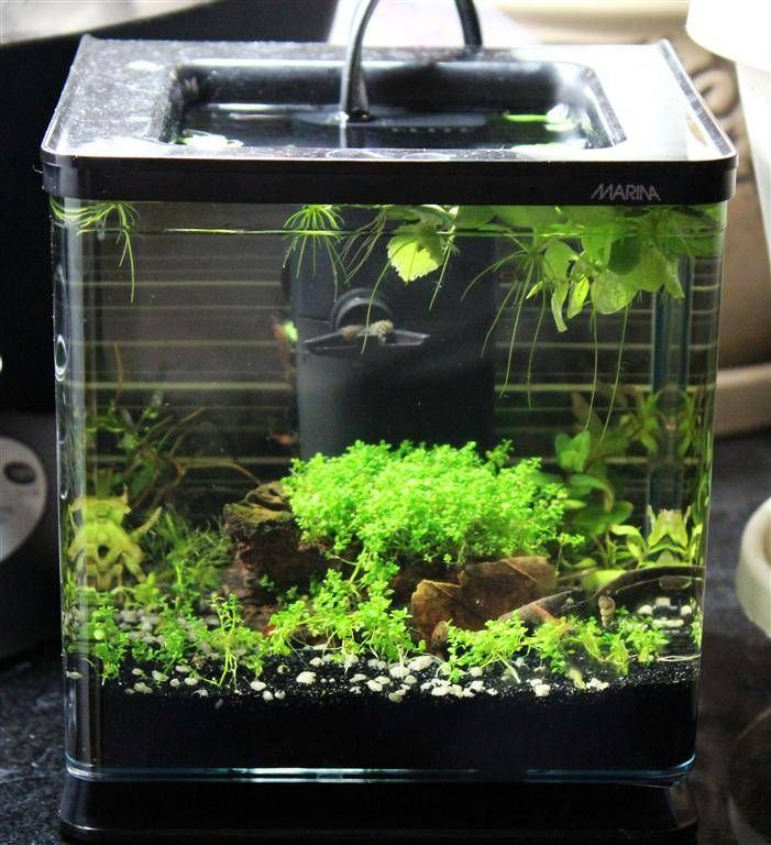 Marina betta kit hagen mini filter pico shrimp tank for Shrimp fish tank