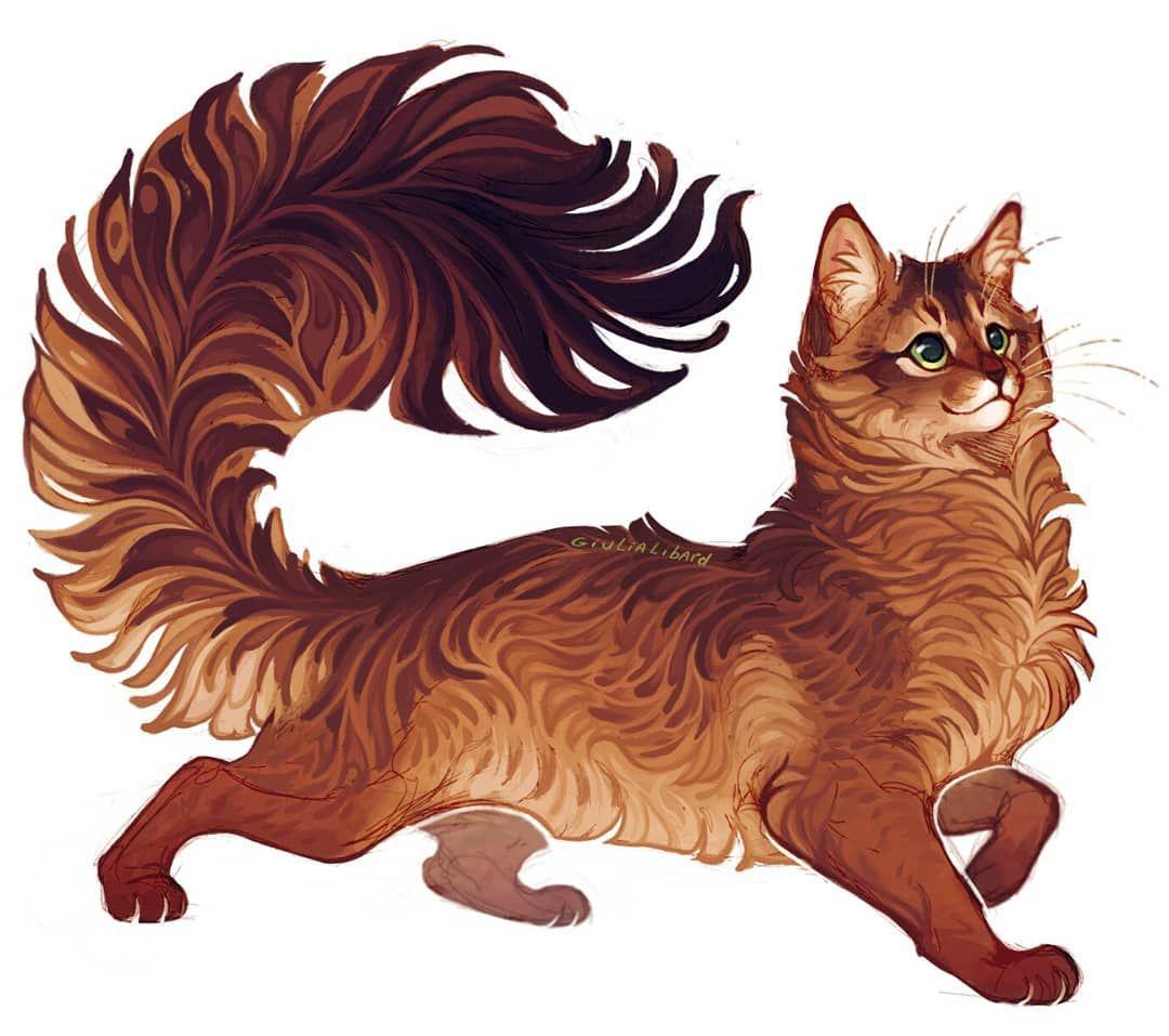 Giulialibard On Instagram Somali Cat Somalicat Cats Cat Pets Pet Animals Animalart Digitalart Warrior Cats Art Animal Drawings Animal Art