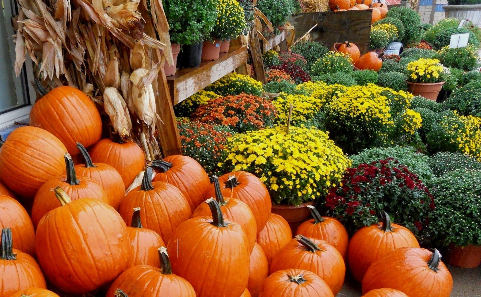Fall Desktop Wallpapers with Pumpkins Wallpapers For