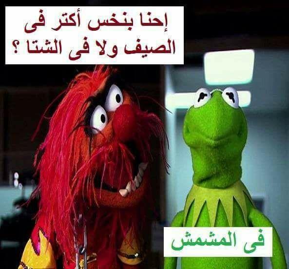 فعلالالا في المشمش ههههههههههههههههههههه Funny Picture Jokes Fun Quotes Funny Arabic Funny