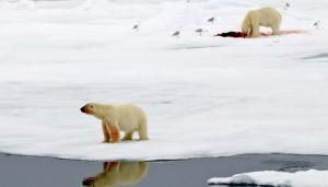 La desaparición de las especies más grandes puede alterar los mares  durante millones de años
