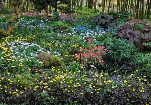 Northwest Garden Nursery Spring Woodland