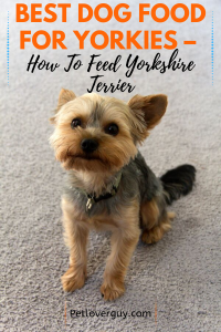 Best Dog Food For Yorkies How To Feed Yorkshire Terrier Best Dog Food Yorkie Puppy Care Dog Food Recipes