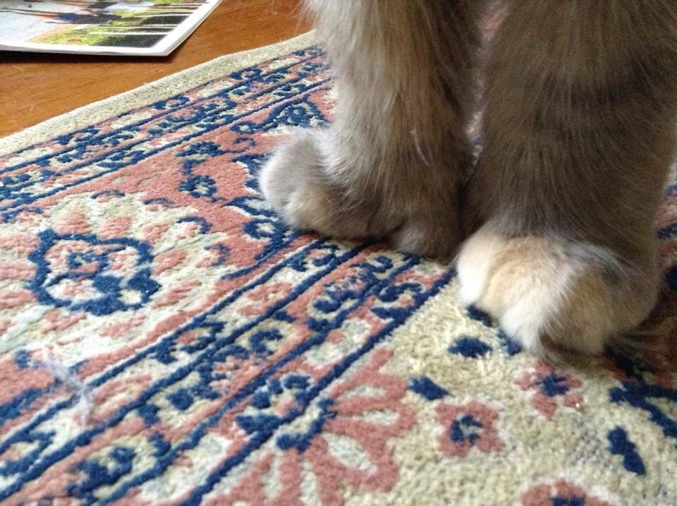 The mitten paws