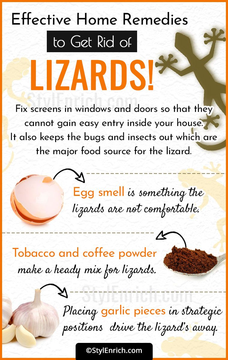 How to get rid of lizards in easy simple harmless ways
