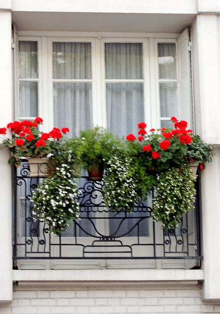 paris window | balcony flowers, flower window, window boxes