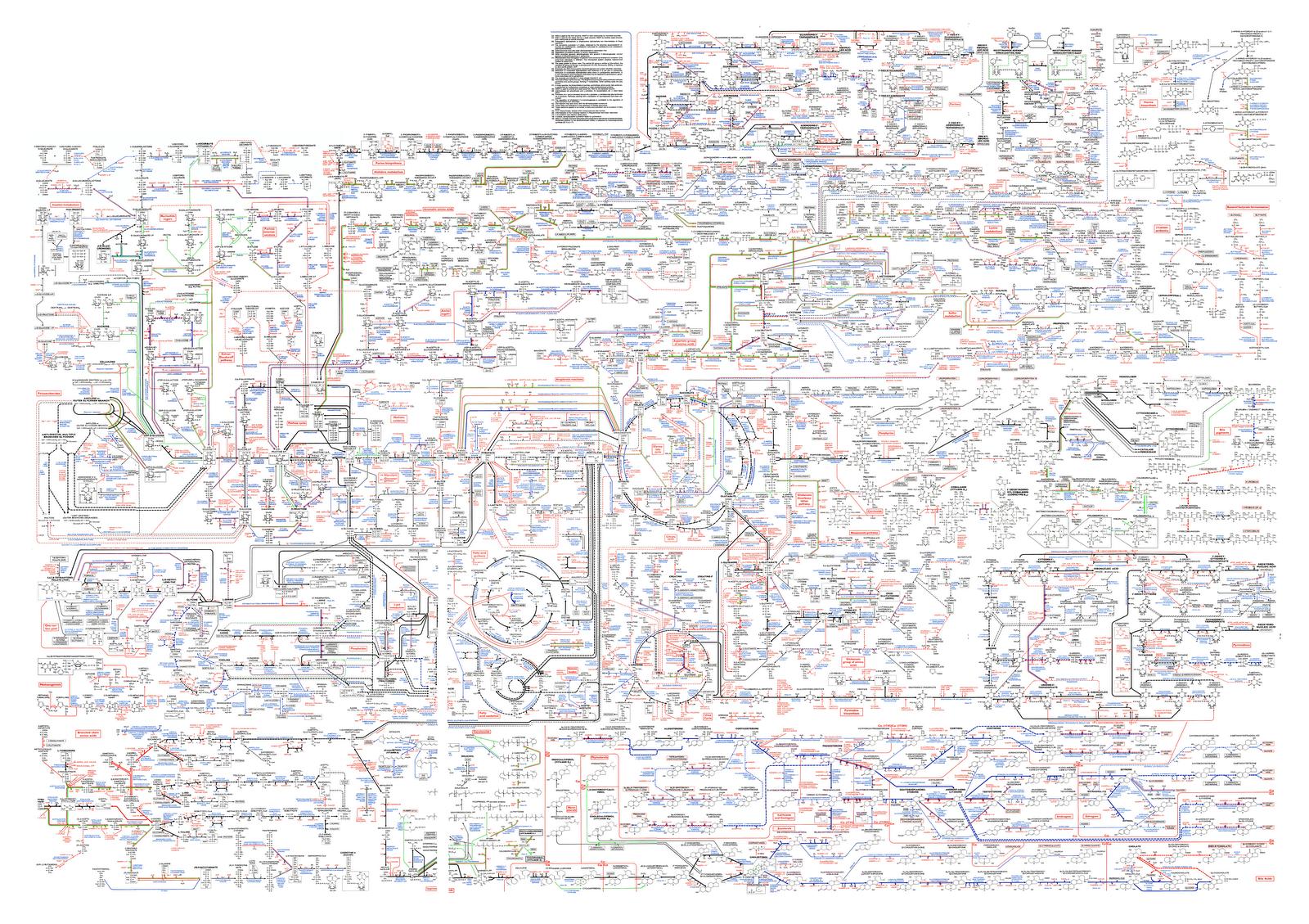 Roche Biochemical Pathways Wall Chart   Interior Design