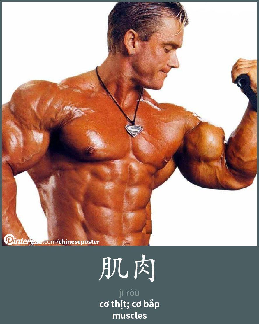 肌肉 - Jīròu -  - muscle