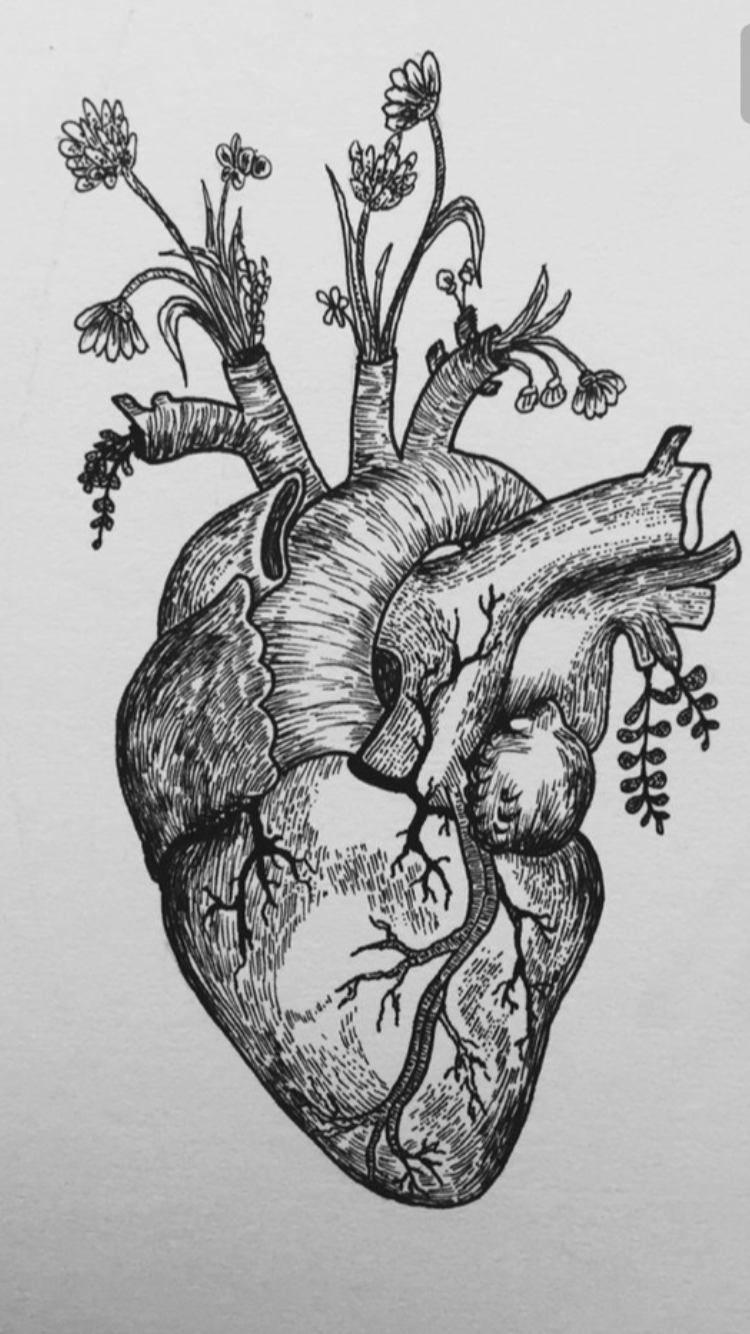 Pin By Kaitlyn Walsh On Ab Tattoos Anatomical Heart Tattoo Heart Drawing