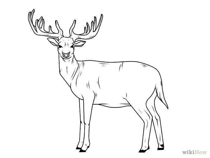 Draw a deer step 15 jpg