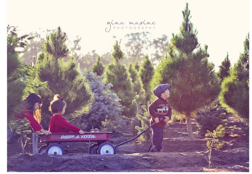 Pin By Melissa Collins On Cute Photography Ideas Christmas Tree Farm Photos Christmas Tree Farm Photo Shoot Tree Farm Photo Shoot