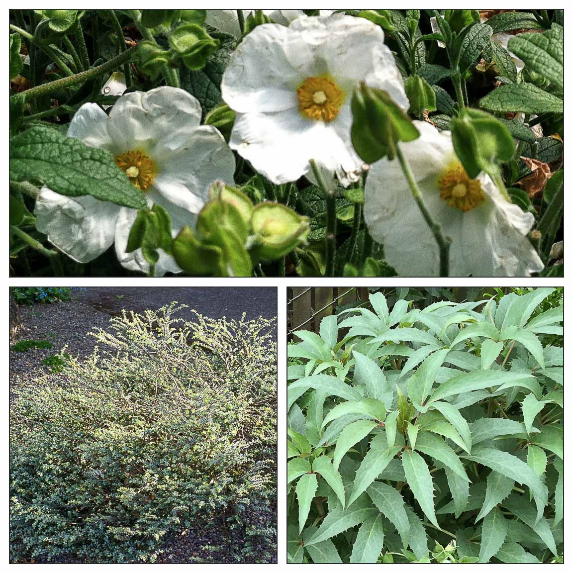 Foliage and Flower Plant Combo for Sun-060516 | eGardenGo