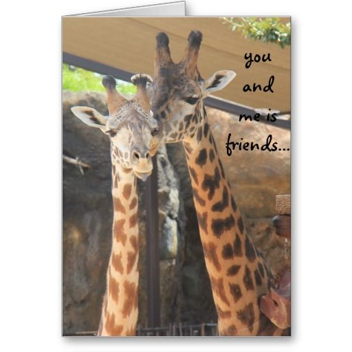 Best Friend Funny Birthday Card Talking Giraffes Card Pinterest