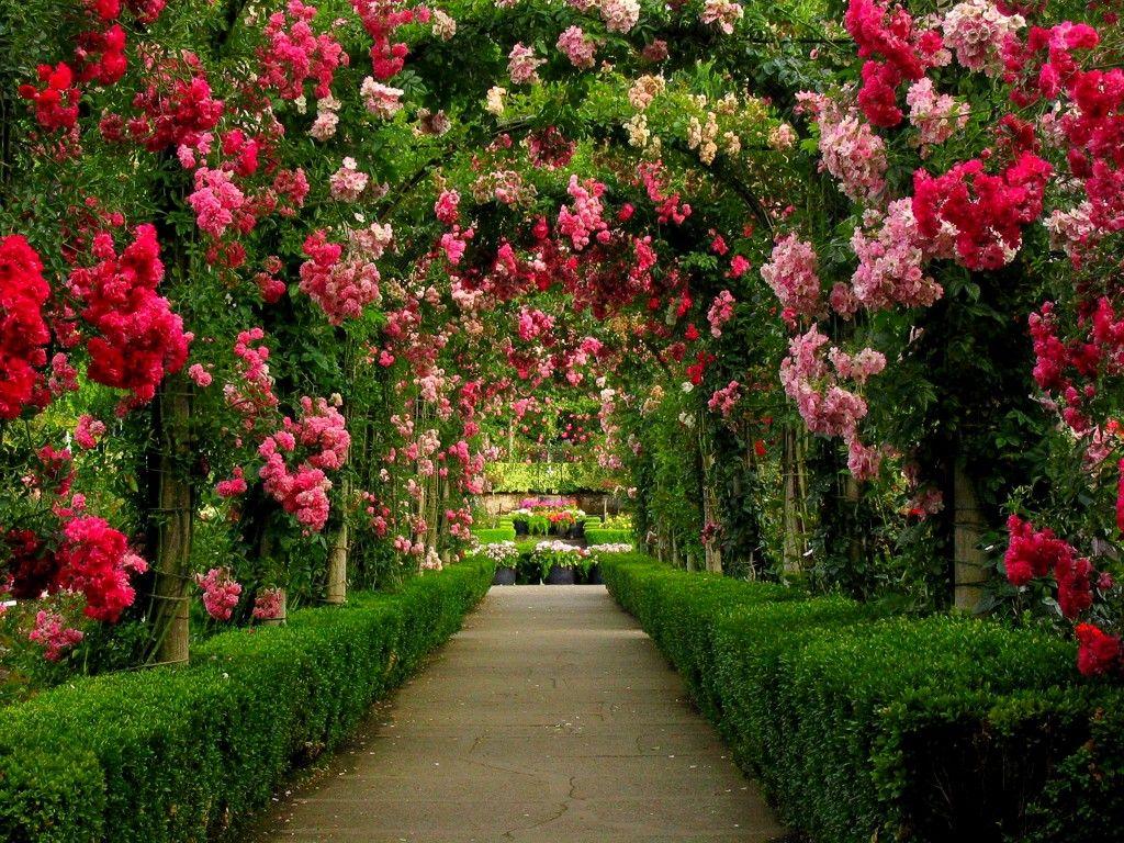 Real jardin botanico de Kew (Londres, Inglaterra, Reino Unido). | London
