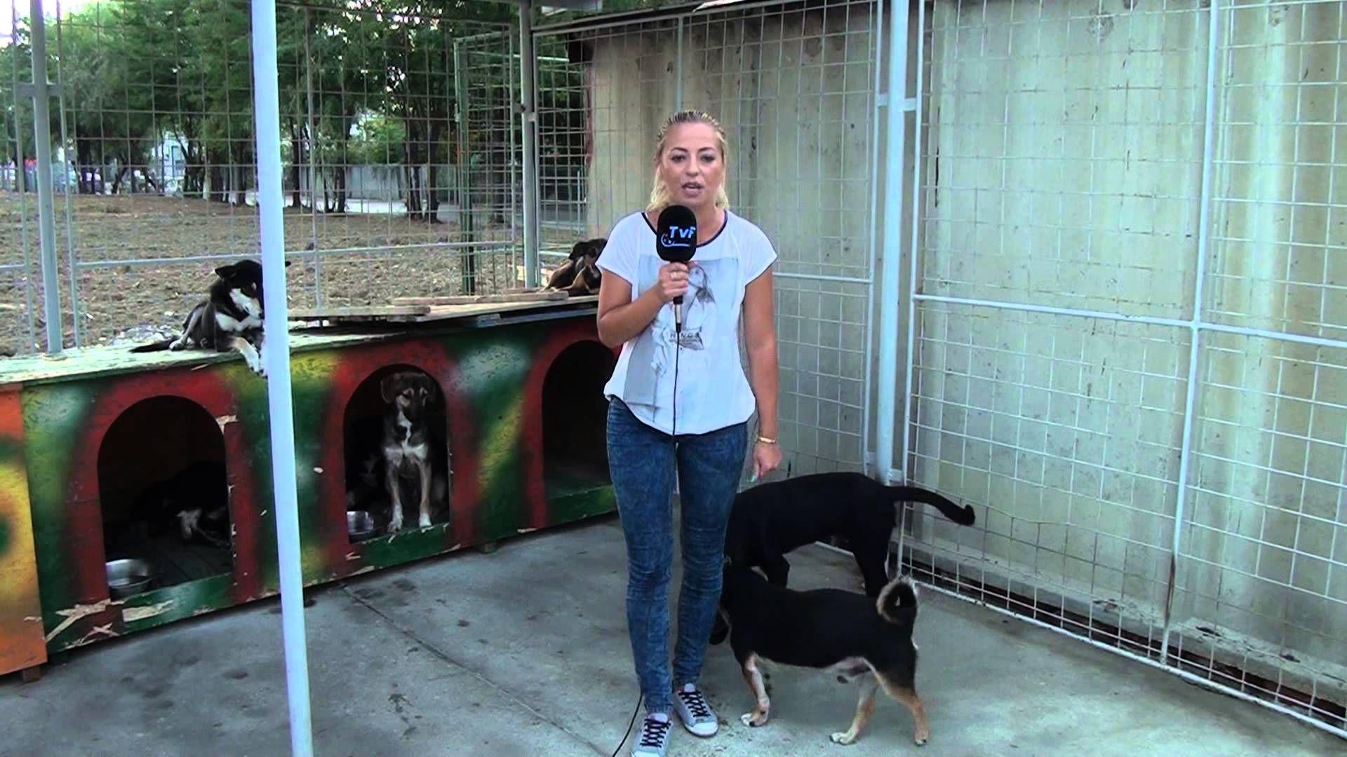 A dog peed 3 times on a tv reporter -Un caine se usureaza de 3 ori pe re...