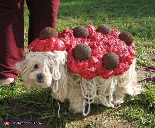 Spaghetti And Meatballs Halloween Costume Contest At Costume