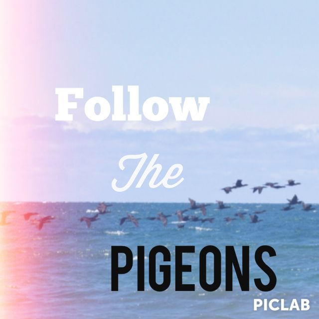 Follow The Pigeons Gallagher Girls Quotes Joe Solomon Only
