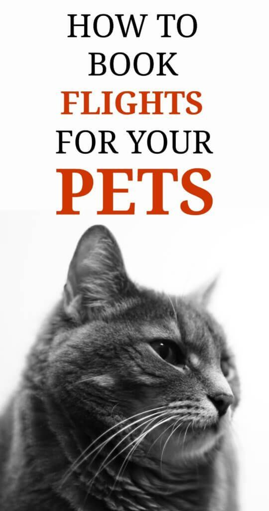 Pin On Pet Travel Accessories