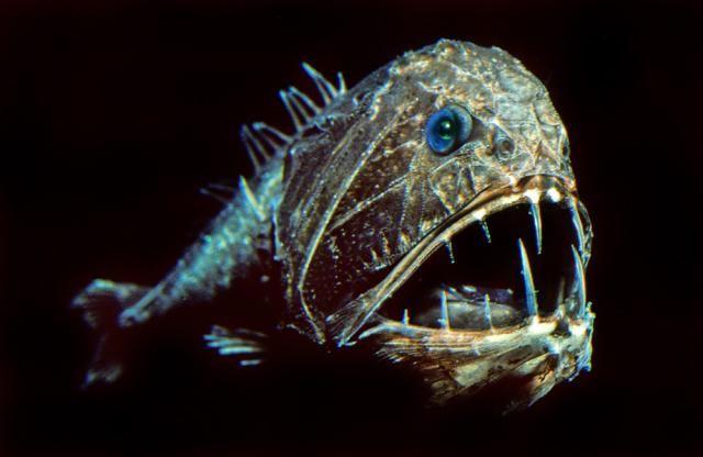 Weird Animals Under The Sea 7
