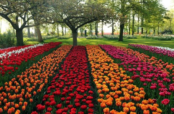 Keukenhof - Fields of Tulips l #thegardenofeurope | Gardens ...