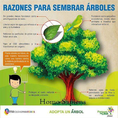 Cuida el ambiente siembra arboles aqui el por que for Tipos de arboles para plantar en casa