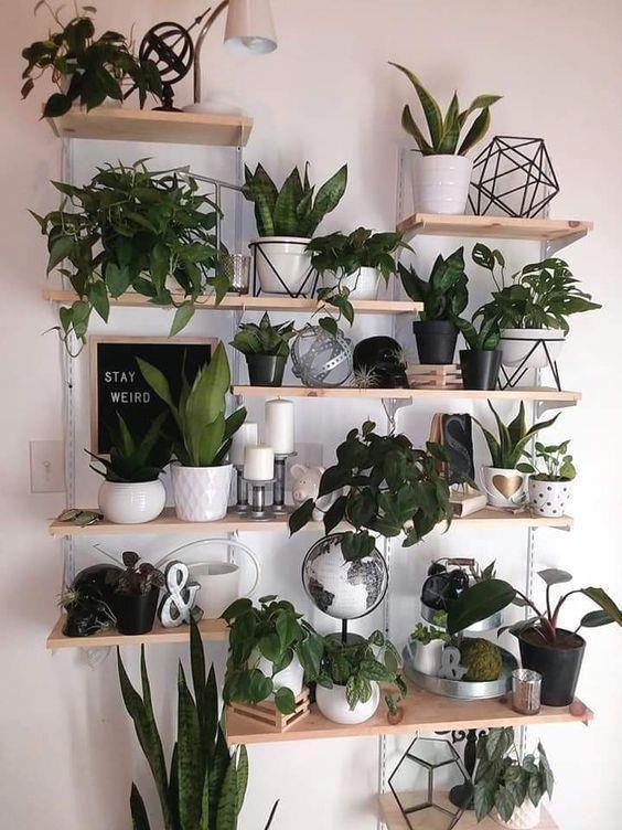 Indoor Plants Plants Wall Wall Decors Diy Plant Decor Wall Living Room Decor In 2020 Diy Plants Decor Living Room Wall Designs Large Indoor Plants