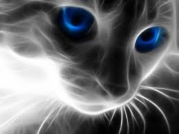 Image Result For Cat Wallpapers For Chromebook Wallpapers And