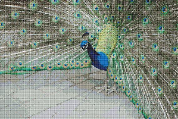 Peacock Cross Stitch Pattern by Avalon Cross Stitch on Etsy