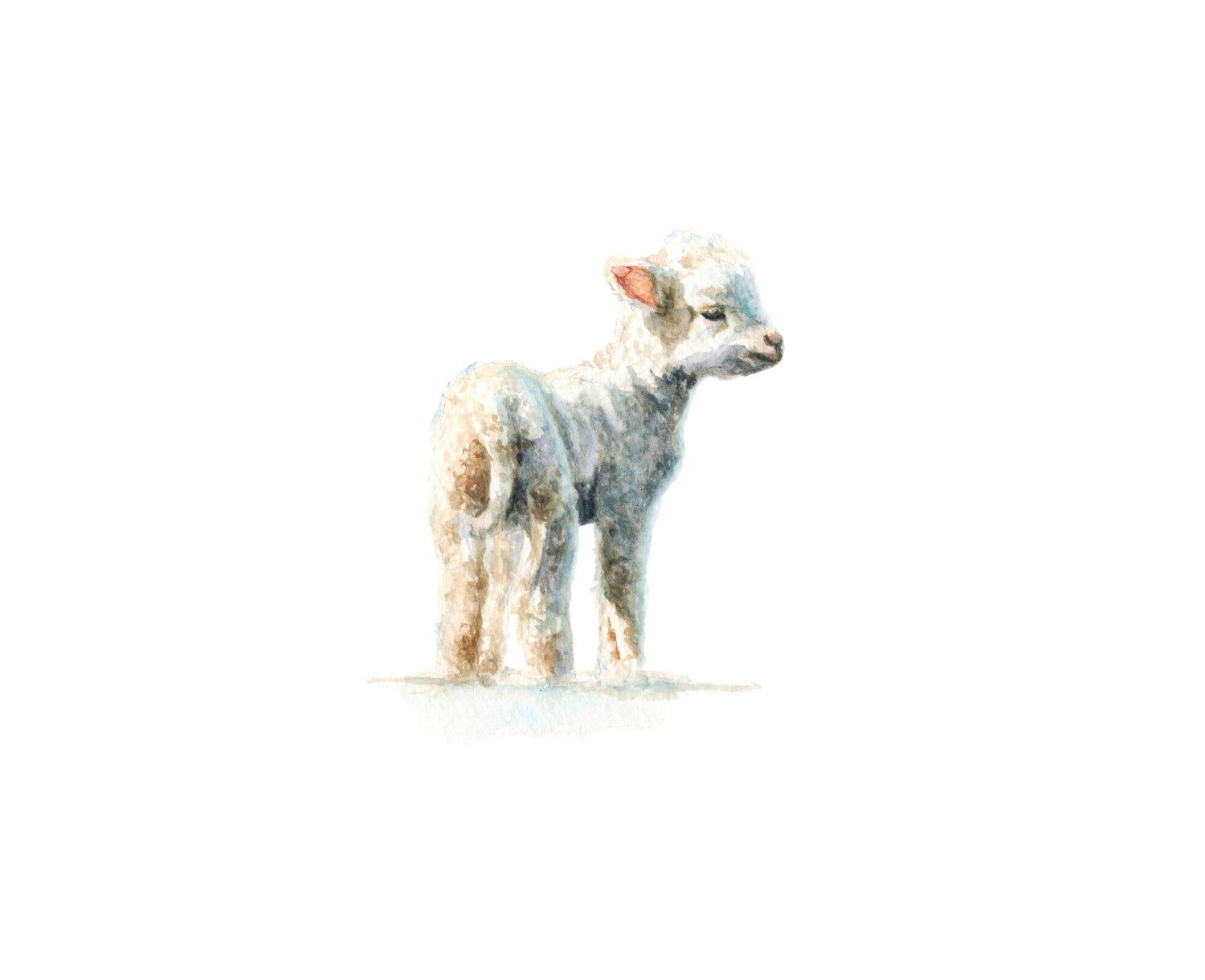 Baby Lamb Drawing Lamb No 1 Art Print Baby Animal Painting Lamb