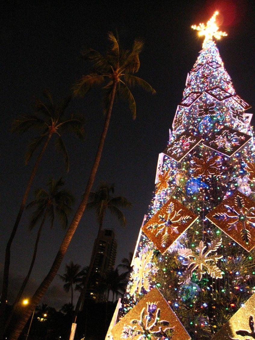Honolulu city Christmas tree at Honolulu Hale. Hawaii Photo by Dawn ...