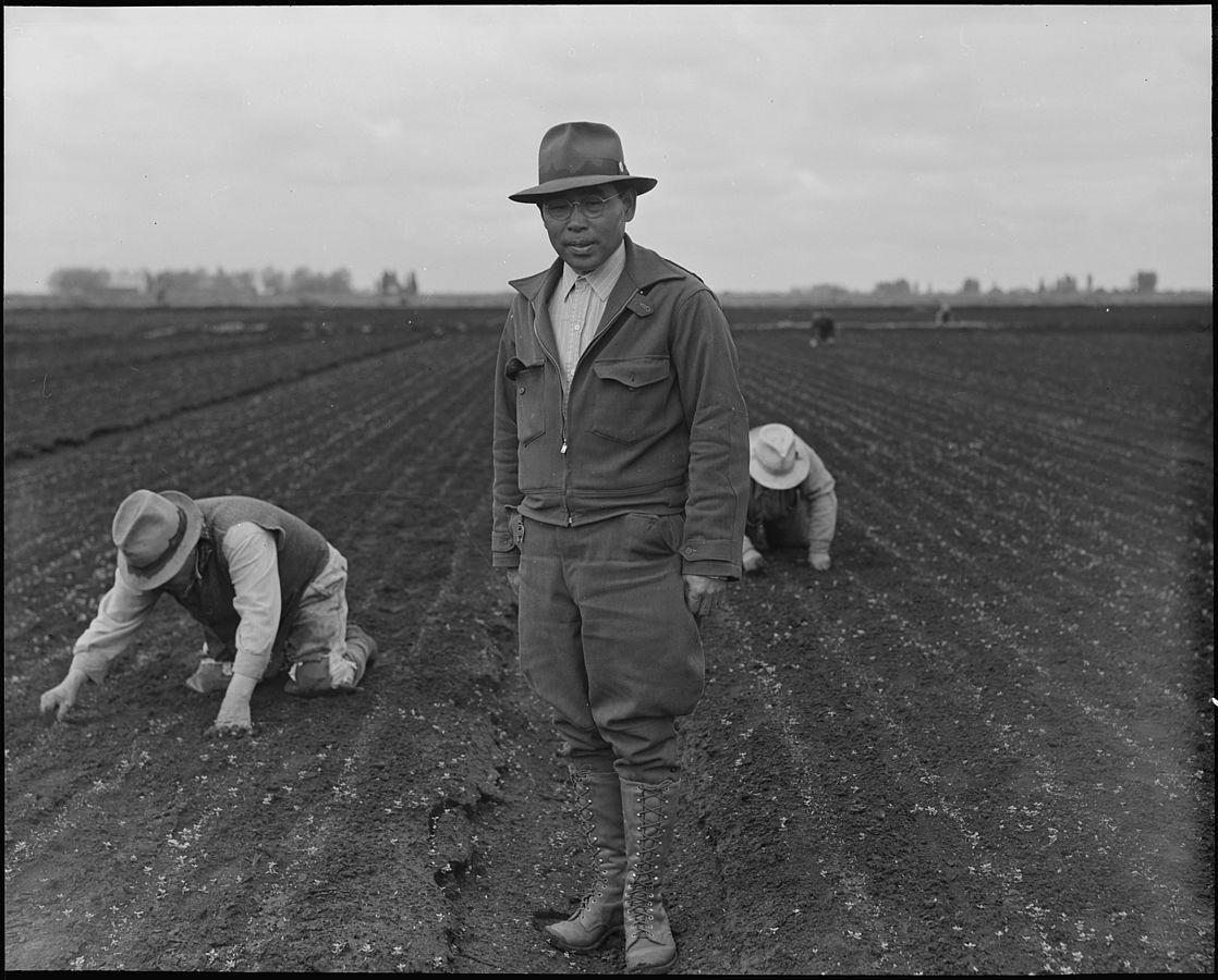 Japanese American Farmers Google Search