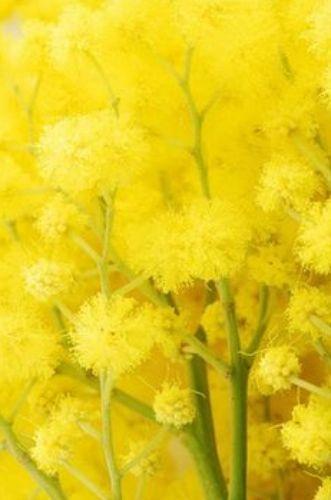 yellow.quenalbertini: Yellow flowers