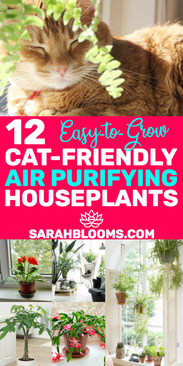 20 Air Purifying Houseplants Safe For Dogs Cats Sarah Blooms